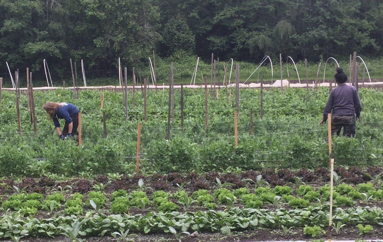 Farm Happenings for June 2, 2021
