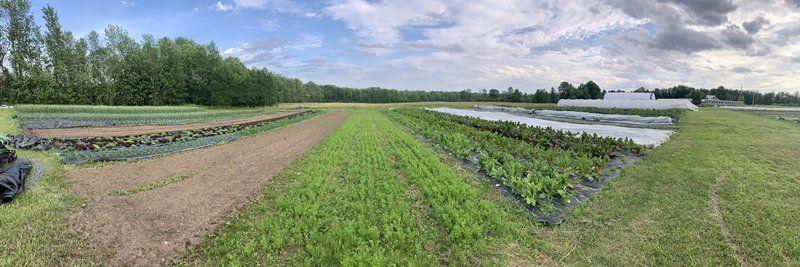 Farm Happenings for June 28-July 2, 2020