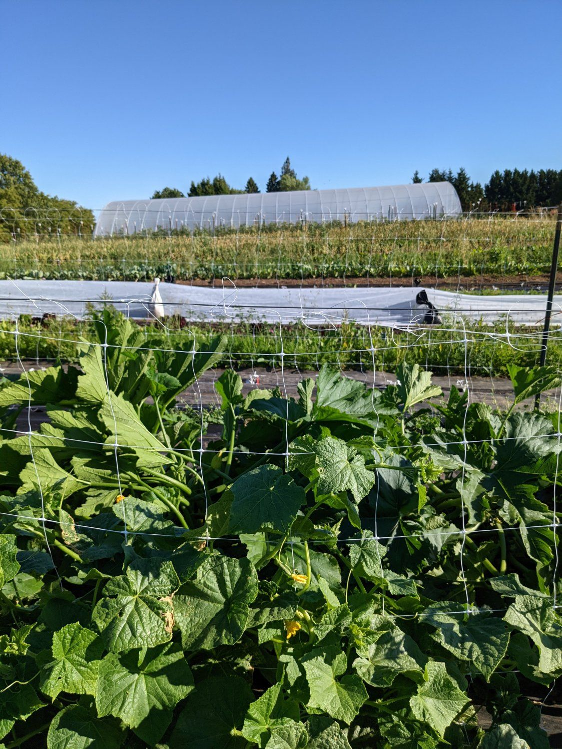 Farm Happening's for July 5th