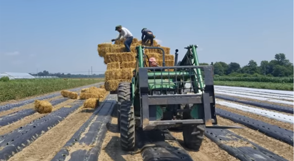 Farm Happening (7th DELIVERY SUMMER out of 20)