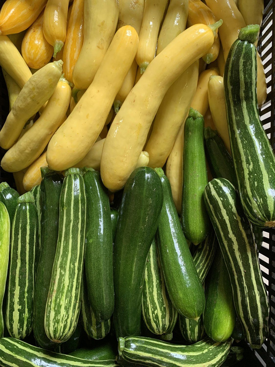 Next Happening: Ideas for all of that Summer Squash...