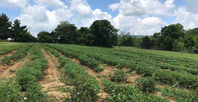 Next Happening: Week 10: Starting the Fall Plantings