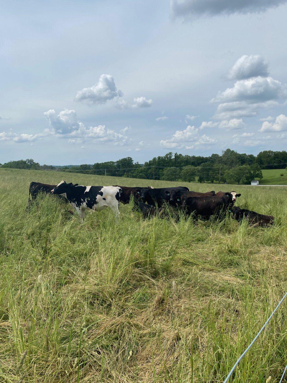 Farm Happenings for Week of August 14, 2021