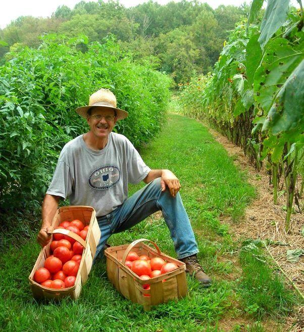 Heat, Rain, and Tomatoes
