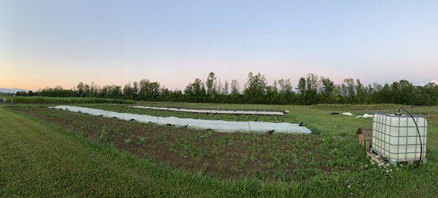 Previous Happening: Farm Happenings for Sep 6-11 2021
