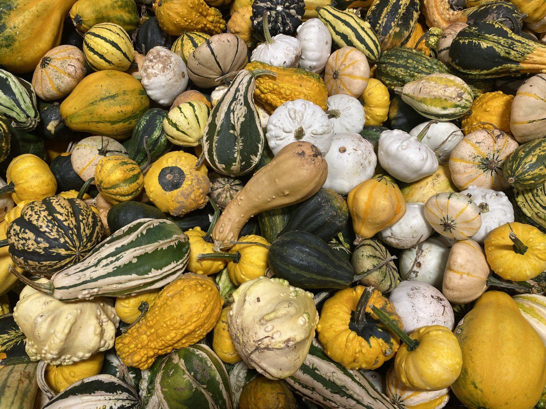 Farm Happenings for Week of September 13, 2021
