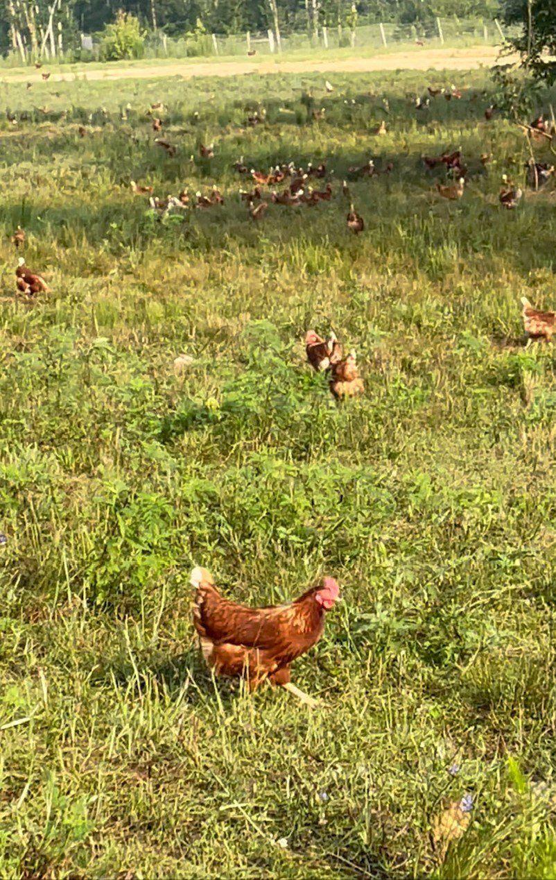 Next Happening: Farm Happenings for September 27th Week