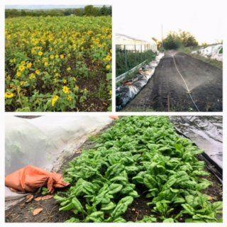 Farm Happenings for October 12, 2021