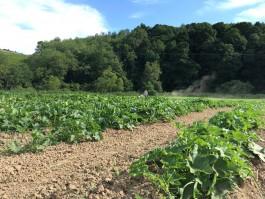 Rivendale Farms CSA Newsletter, Week 6 (July 17)