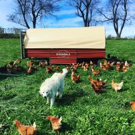Rivendale Farms CSA Newsletter, Week 22 (Nov 6)