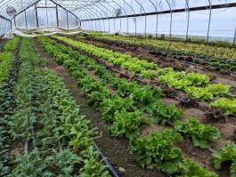 Farm Happenings for January 5, 2019