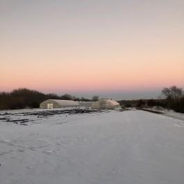 Farm Happenings for February 13, 2019: Halfway through Winter CSA!