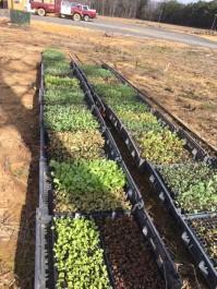Farm Happenings for February 18, 2019