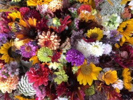 Introducing Calliope Flowers!