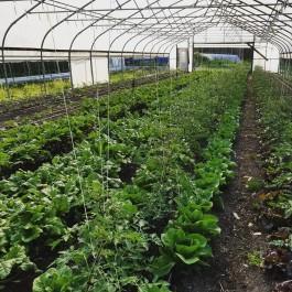 First Farm Share Saturday!