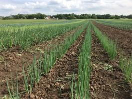 Farmer John Writes: When the Pavement Dries Fast