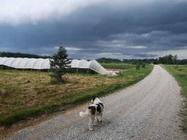 Farm Happenings for August 1, 2019