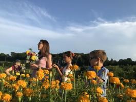 No Farm Romance in August