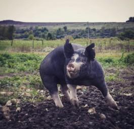 Farm Happenings for September 22, 2019