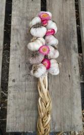 Farm Happenings October 8 - Winter program, garlic and extras