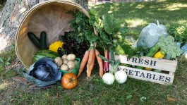 Farm Happenings for the week of October 22, 2019