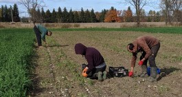 Farm Happenings for October 31, 2019