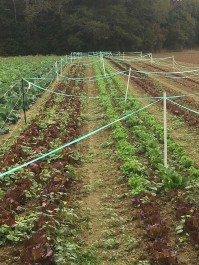 Farm Happenings for November 4, 2019
