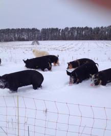 Cooper's CSA Farm Happenings Nov 6-9 2019 Winter Spring Farm Box