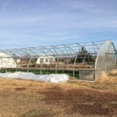 Farm Happenings for November 13, 2019: Week 7 out of 12!