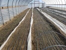 It's Germination Time!
