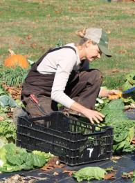 Farm Happenings-Last CSA of the 2019 season!
