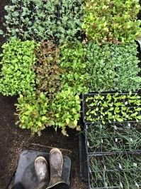 Farm Stand Home Delivery for Tuesday April 28