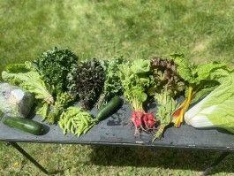 Farm Happenings for CSA week 4