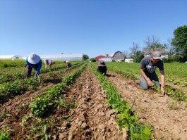 Farm Happenings for July 23, 2020