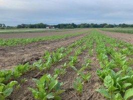 Farmer John Writes: Is a Farm a Being?