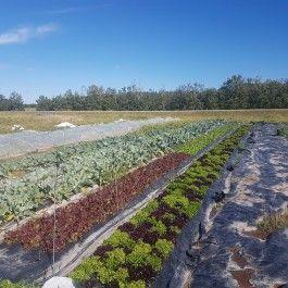 Farm Happenings for September 9, 2020