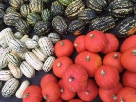 The bounty of fall!