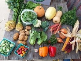 CSA Box 16 (Please Click on Continue Reading to see Whole Newsletter)