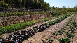 Farm Happenings for October 5, 2020