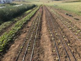 Farm Happenings for October 8, 2020