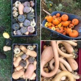 Farm Happenings for October 15, 2020