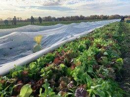 Farmer John Writes: A Bountiful Crop Report