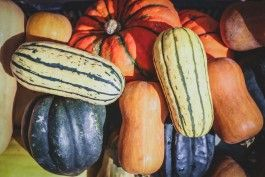 Farm Happenings for Autumn CSA week 1, 2020 (Nov 5 thru Nov 10, 2020)
