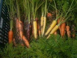 Farm Happening for December 4