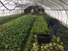 RP-Farm Happenings (Delivery 4 Fall/Winter out of 8)