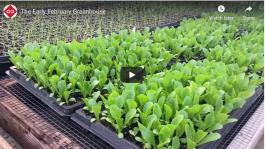 The February Greenhouse