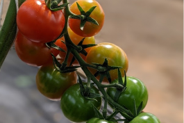 Farm Happenings for May 7, 2021
