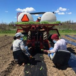Field planting time