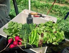 Farm Happenings for September 3+4, 2021