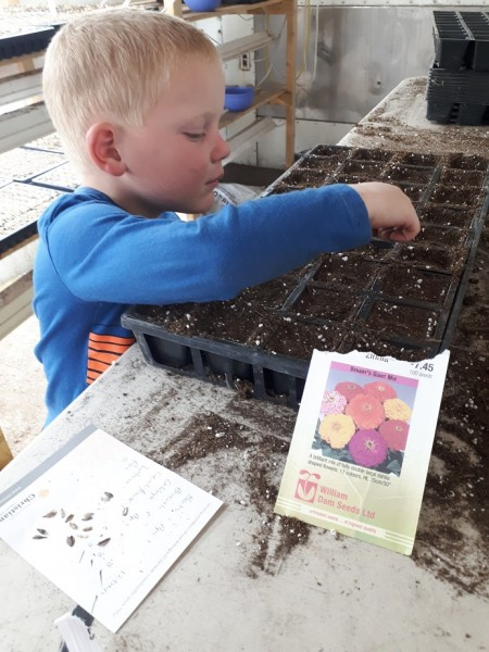 The strawberries are all planted!